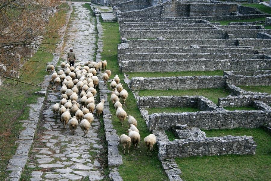 sepino-altilia-pastore-pecore